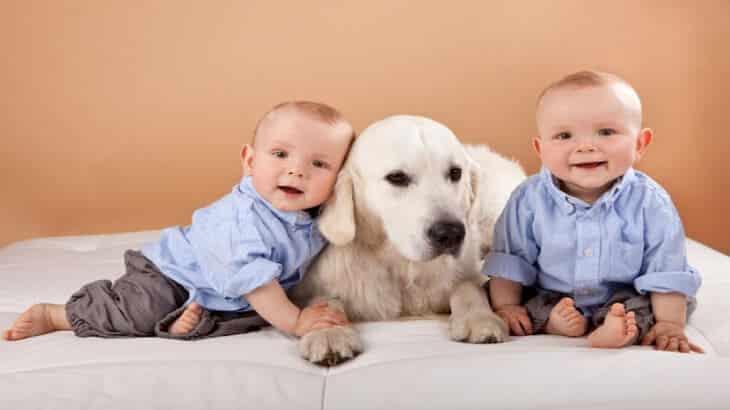 مخاطر تربية الحيوانات على صحة الاطفال