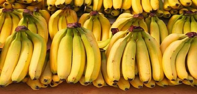 فوائد أكل الموز وأضراره على جسم الإنسان