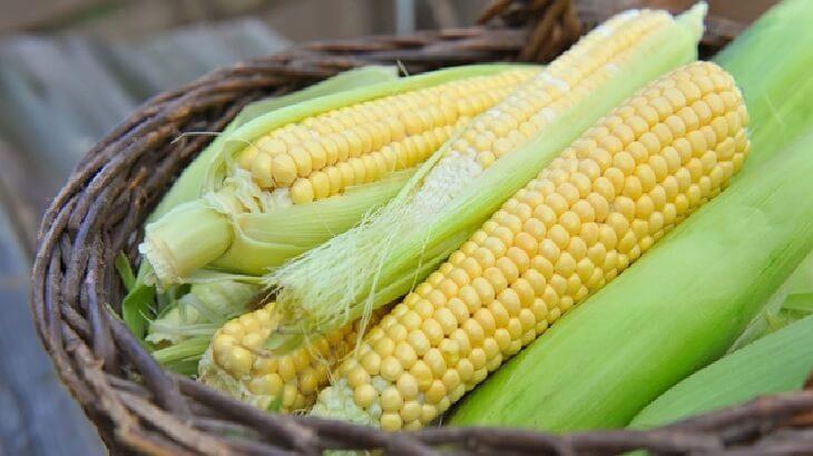 فوائد الذرة، 15 فائدة صحية علاجية للانسان