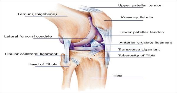 علاج خشونة الركبة والمفاصل بالزيوت الطبيعية