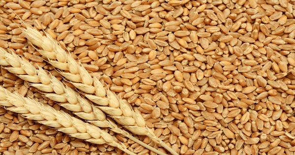 رجيم جنين القمح للتخسيس السريع وطريقة استخدامه | ماميتو