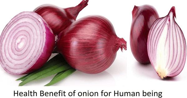 ما هي فوائد البصل لجسم الانسان