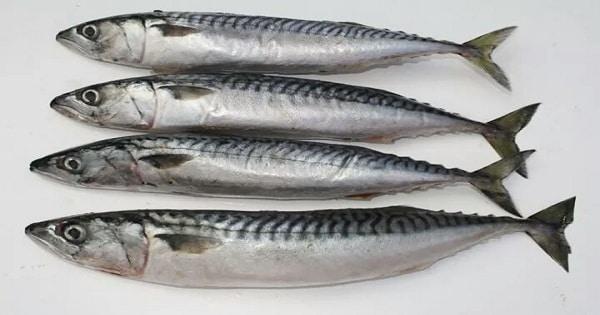 طريقة عمل التونة بسمك الماكريل
