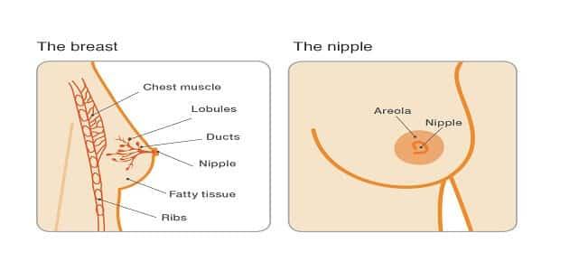 أعراض سرطان الثدي الحميد والخبيث بالتفصيل