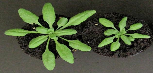 أنواع الهرمونات النباتية وفوائدها