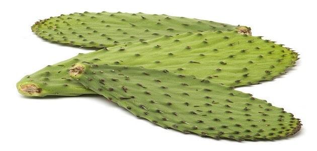 فوائد أوراق التين الشوكي للبشرة