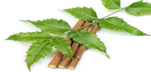 فوائد شجرة النيم للرجيم