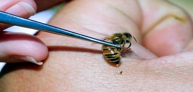 فوائد وأضرار سم النحل