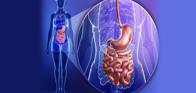 علاج المعدة العصبية والأمعاء