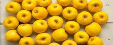 فوائد التفاح الأصفر في الرجيم