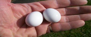 أسرار استخدام بيض الحمام للجنس للرجال والنساء