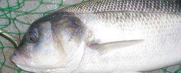 طريقة عمل شوربة سمك اللوت بالفرن