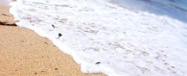 زبد البحر