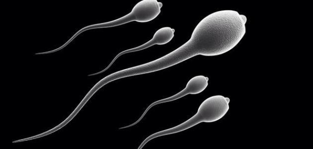 هل تشوهات الحيوان المنوي تمنع حدوث الحملهل تشوهات الحيوان المنوي تمنع حدوث الحمل