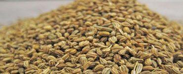 فوائد عشبة النانخه لتنحيف الكرش