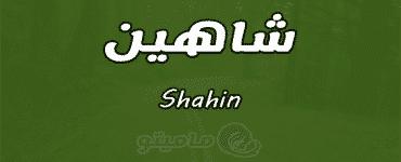 معنى اسم شاهين Shahin واسرار شخصيته وصفاته