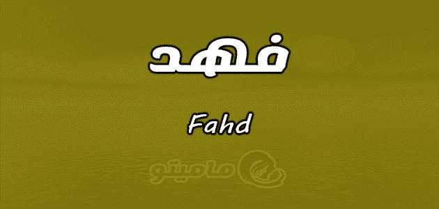معنى اسم فهد Fahd وصفات حامل الاسم