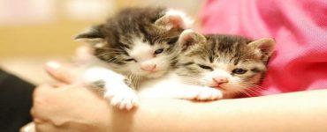 هل مرض داء القطط يمنع البنات من الحمل والولادة ويسبب العقم