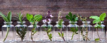 اسماء نباتات طاردة للناموس في المنزل