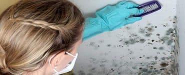 علاج الرطوبة والعفن في المنزل بالكامل