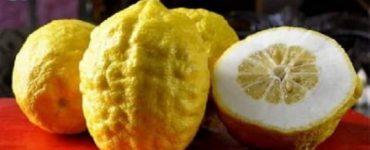 فوائد تناول فاكهة الترنج للحامل في الشهور الاخيرة