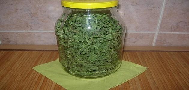 طريقة تجفيف الملوخية الخضراء وكيفية تنشيفها بعد الخرط