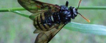 طرق التخلص من الحشرات الطائرة