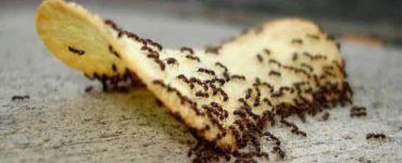 كيف ازيل النمل من البيت