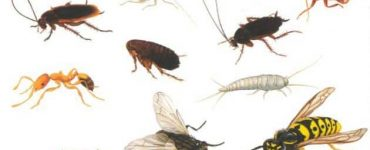 أسباب ظهور حشرات في المنزل