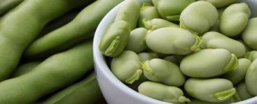 كيفية فرز الفول الأخضر