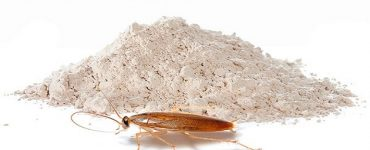 طريقة لعمل عجينة حمض البوريك للصراصير والنمل