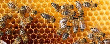 كيف يمكن التخلص من خلية النحل