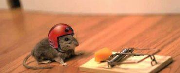 كيف تصنع فخ الفئران