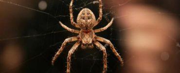 أضرار وجود العنكبوت في البيت