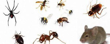 الحشرات والآفات