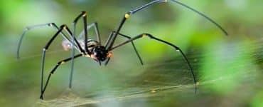 التخلص من العناكب نهائياً