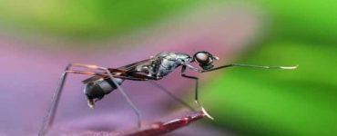 ما هي وسائل مكافحة البعوض طبيعياً
