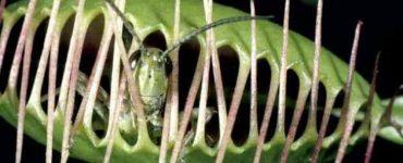 ما أسماء نباتات اكلة الحشرات