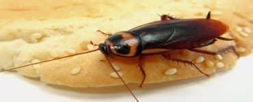 طرق القضاء على الصراصير في المجاري