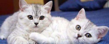 أضرار القطط