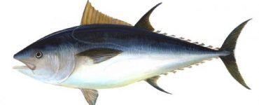 الأسماك في المحيط الأطلسي
