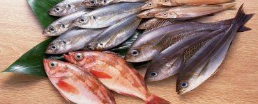 السمك الطازج