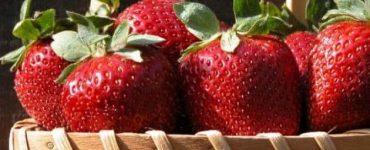 فوائد واضرار الفراولة للاطفال