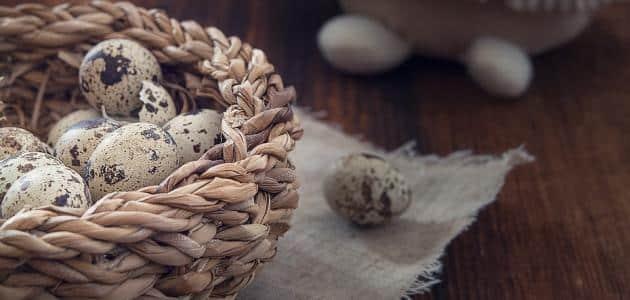 منافع بيض السمان للاطفال