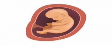 كيف تكون اول حركة للجنين